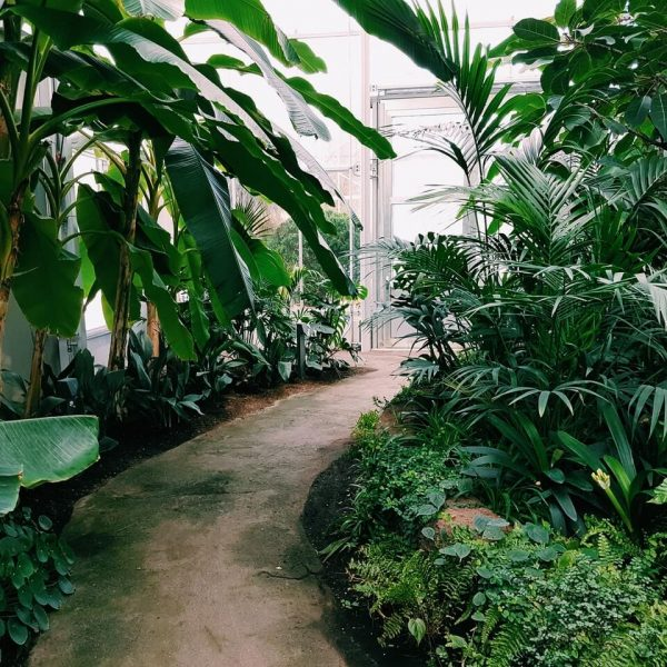 photography-of-pathway-surrounded-by-plants.jpg